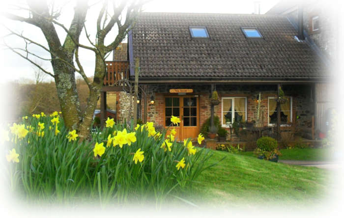 tea room daffodils.jpg